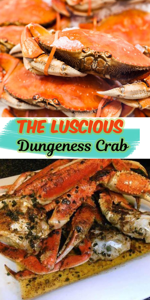 The Luscious Dungeness Crab 1